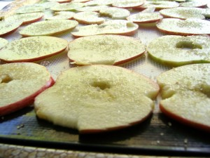 Apple Slices Ready for Drying