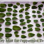 Dry Peppermint for Herbal Tea