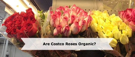 Are Costco Roses Organic