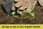 30 Tips to Use in Your Organic Garden