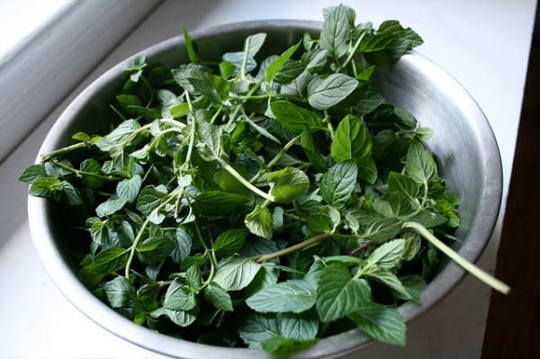 colander with fresh mint sprigs ready to be added to homemade sun tea recipe