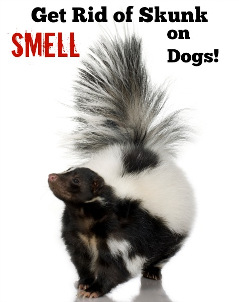 Get Rid of Skunk Smell on Dogs