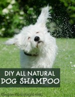 The Best DIY All Natural Dog Shampoo Recipe for Your Dog