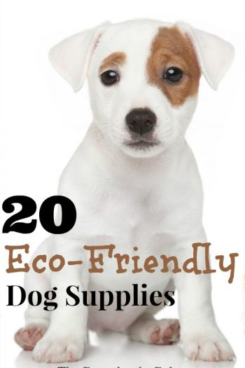 20 Safe and Eco-Friendly Dog Supplies When Only the Best for Your Dog Will Do