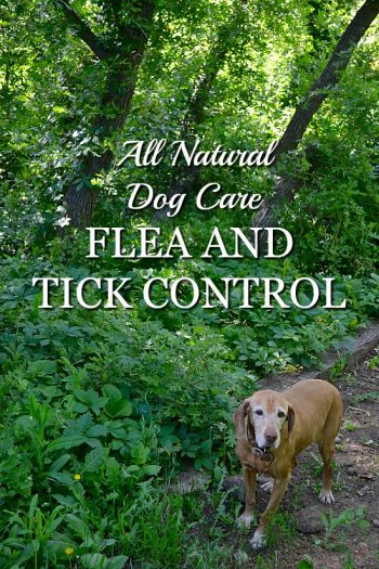 All Natural Dog Care: Flea and Tick Control
